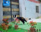 广州宠物训练学校 狗狗训犬基地 海珠区可上门接送