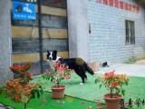 廣州寵物訓練學校 狗狗訓犬基地 天河區可上門接送