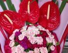 合肥徽州大道长江中路太湖路附近鲜花店开业花篮植物盆景