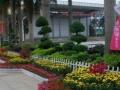 武汉植物租摆、园林养护、盆栽租售、鲜花速递