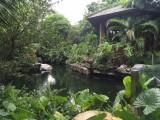 高新区鱼缸水草造景