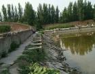 顺河回族区 开封市东郊乡焦街村 土地 5亩地的垂钓鱼平米