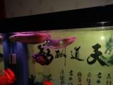银龙鱼,鹦鹉鱼处理了。
