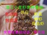 供小龙虾虾苗、虾种,提供专业技术支持小龙虾价格