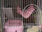 加菲猫三个月公