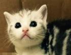 宠物猫咪七夕大优惠,可以一起上门看猫挑选