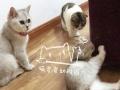 家庭寄养 免费接送 猫咪