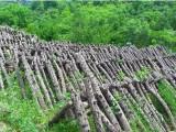 陕西供销网提供优质无污染陕西特产 秦岭野外种植椴木耳