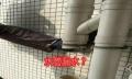 广州央视CCTV专访、专业蜘蛛人外墙清洁、防水补漏