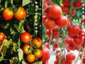品质植物生长灯供应批发,朔州植物生长灯多少钱