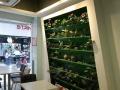 马垅商业街高档咖啡店白菜价转让(51旺铺)