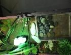 乌龟箱 种菜箱