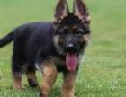 南充什么地方有狗场哪里有卖宠物狗/南充哪里有卖德牧犬