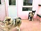 玉桥宠物寄养 长期提供猫猫狗狗寄养服务 房间有暖气可接送