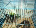 魔王松鼠低价出售。