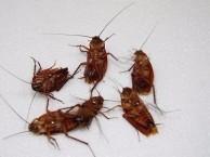 涿州灭蟑螂公司杀各种虫子公司