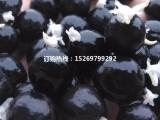 微山湖杂交高产芡实苗 芡实种苗 承接芡实种植