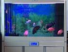 天王海霸鱼缸出售