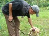 佛山本地专业寄养大型、中型犬-------长期寄养