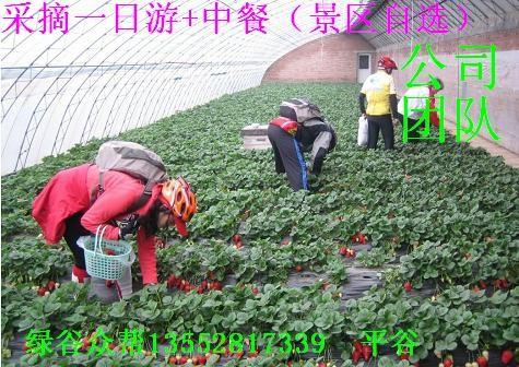 平谷京东大溶洞农家院+采摘 冬季一日游