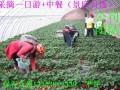 平谷渔阳滑雪场 渔阳滑雪场门票 采摘草莓 草莓采摘哪里好