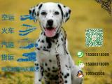 宠物店和狗市里的斑点狗可以买吗 健康的多少钱一只