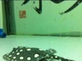 高档超白鱼缸热带鱼缸金龙鱼缸特价转让