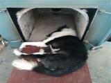 上海寵物火化寵物殯葬動物尸體無害化處理上門接送