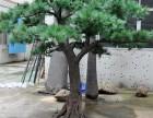 北京仿真树厂家