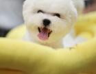 哪里出售比熊 比熊 哪里出售 比熊价格