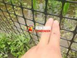 水稻围栏网养殖网 结实耐用 厂家直销