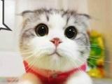 家养可爱猫咪求主人 价格好商量 欢迎上门来看