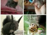 松鼠蜥蜴刺猬兔子荷兰猪西施熊密袋乌龟微店交易