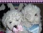 宜昌万兴犬舍出售各类名犬~~