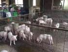 猪场,出租出售