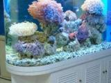 专业定制鱼缸,鱼缸水草设计,鱼缸租赁,零售各种观赏鱼