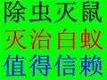 观澜蟑螂防治(松元厦-观城-库坑-企坪-庙溪)灭蟑螂环保高效