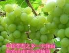 大泽山葡萄迎中秋庆国庆——【迎宾山庄】开心采摘园