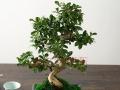 承接厦门绿植花卉盆栽,开业花篮长短期租摆,批发销售