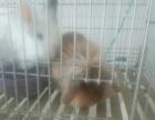 家养宠物兔处理