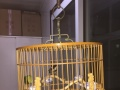 便宜出售鸟笼,鸟!!!