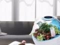空气净化器 植物生态空气净化器招商