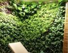 天水植物墙 绿植墙 立体绿化