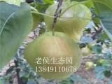 郑州近郊一日游景点 首选荥阳老候生态采摘园