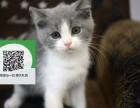 新乡哪里有宠物猫出售,新乡哪里有卖纯种蓝猫价格