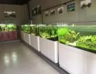 本色水景-水草造景草缸造景水陆缸雨林造景培训学习教程开店加盟