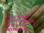 广州美味早点包子馒头花卷技术培训 舌尖小吃一对一教学