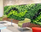 定做仿真绿植墙厂家北京厂家