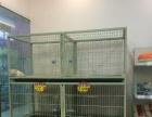 大学路陈砦花卉市场营业中宠物店转让