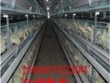 绿色蛋鸡笼养殖设备 鸡笼价格 优质蛋鸡笼